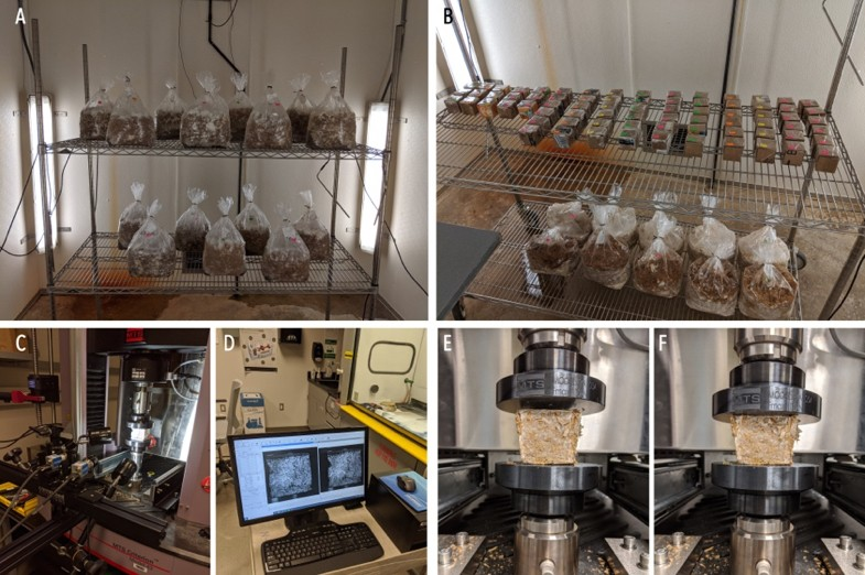 (A) Treatments in bags at the Mushroom Research Center; (B) Treatments in formworks at the Mushroom Research Center; (C) DIC equipment at the Materials Research Institute; (D) DIC System at the Materials Research Institute; (E) Start of the compression test of an MBC sample; (F) End of the compression test of an MBC sample. Image credit: Ali Ghazvinian